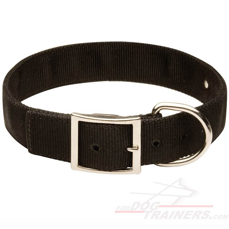 All Weather 2 Ply Nylon Dog Collar with name tag [C42 ...