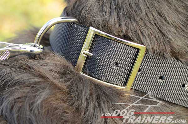 Durable Hardware on Nylon Dog Collar