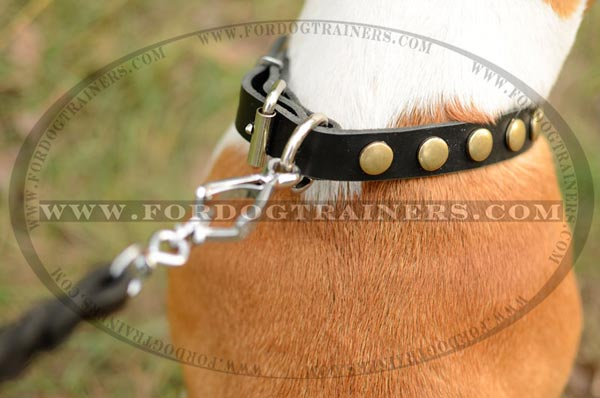 Nickel D-Ring on Dog Collar Leather