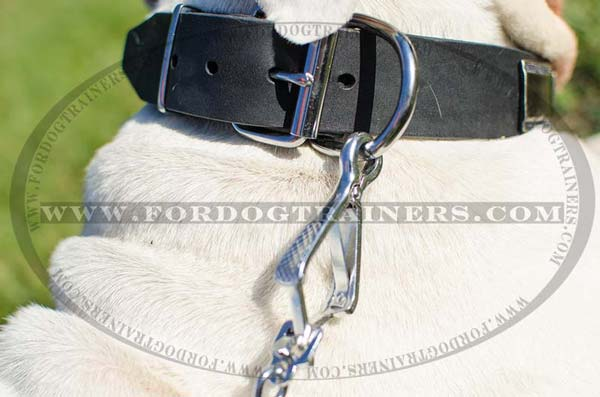 Durable Nickel Hardware on Dog Collar Leather for Walking