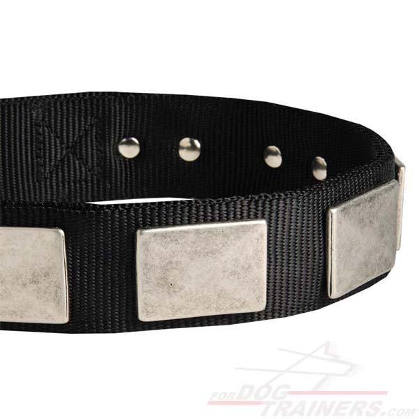 Daily Nylon Dog Collar With Riveted Hardware