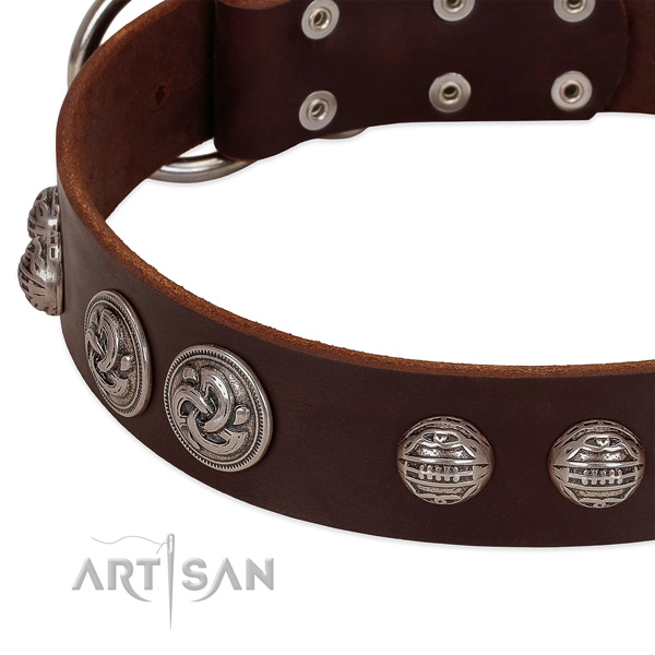 Brown leather dog collar with riveted ornate conchos