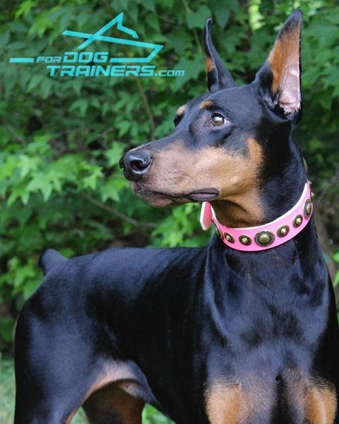 Comfortable pink genuine leather Doberman collar with embellishments