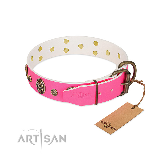 Selected Leather Dog Collar for Regular Wear
