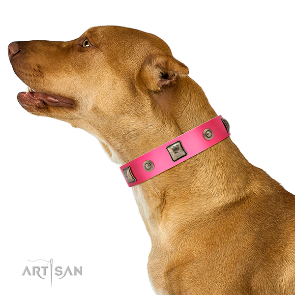 Decorated leather Dalmatian collar for comfortable