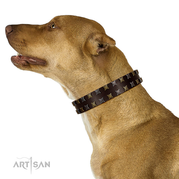 Dependable Pitbull Artisan leather collar for pleasant