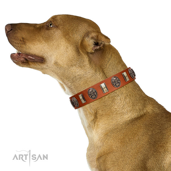 Tan Leather Artisan Leather Pitbull Collar for DAily Control