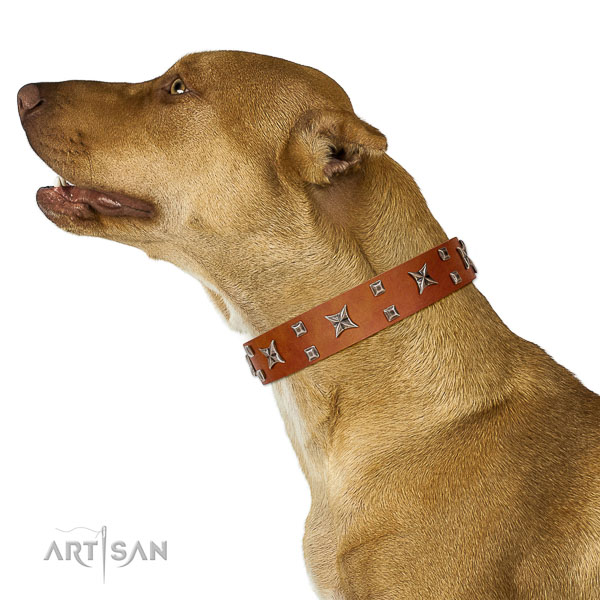 Decorated leather Pitbull collar with silver-like covered stars and studs