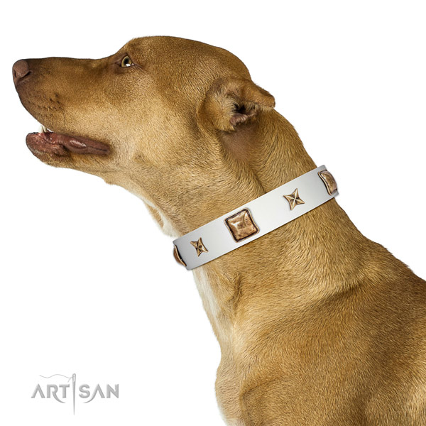 Comfortable white leather Pitbull collar for walking