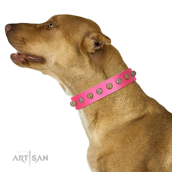 Extraordinary walking pink leather Pitbull collar with