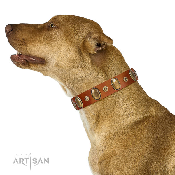 Tan Leather Pitbull Collar for Comfortable Walks