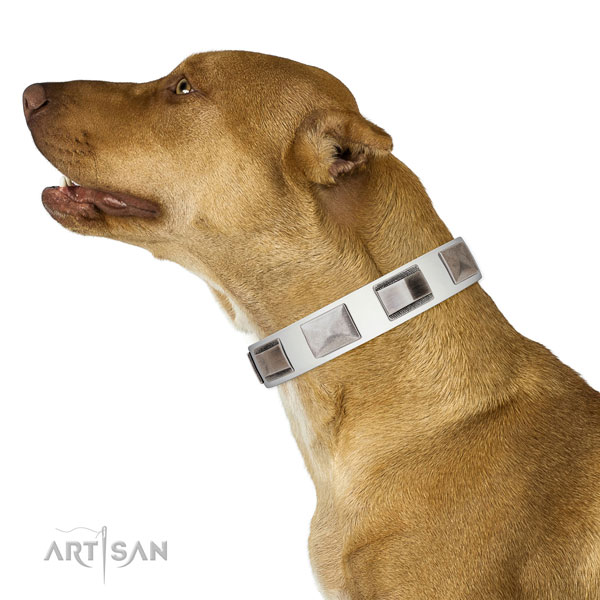 Extraordinary walking leather Pitbull collar with chic decorations