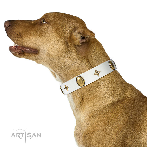 White leather Pitbull collar with attractive decorations