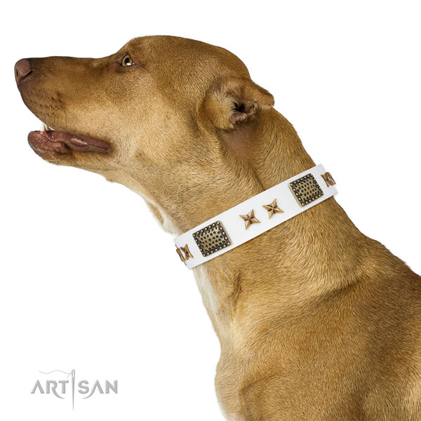 Pitbull easy wearing dog collar of incredible quality genuine leather