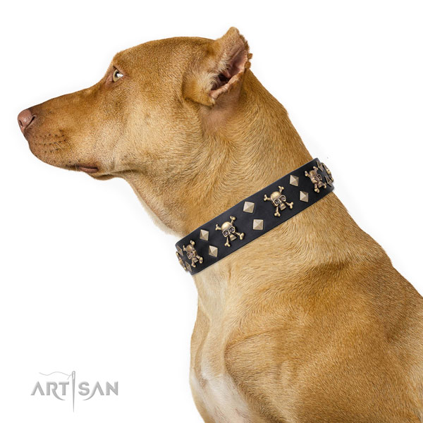 Pitbull remarkable natural genuine leather dog collar with adornments