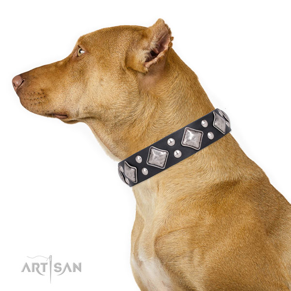 Pitbull perfect fit full grain genuine leather dog collar with embellishments