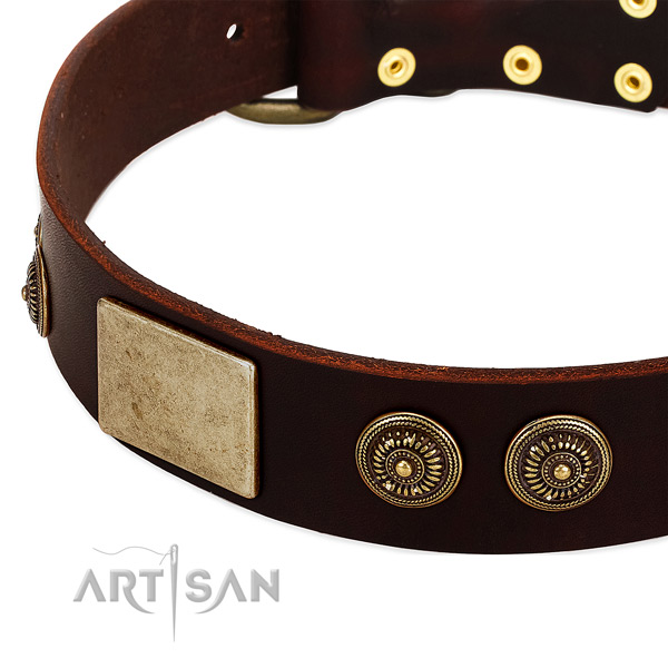 Brown dog collar with large plates and engraved studs