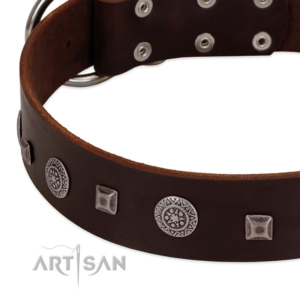 Modern brown leather dog collar with cool decorations