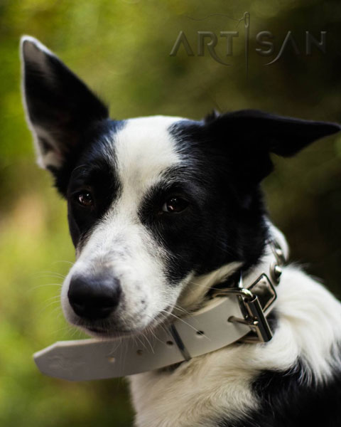 White leather dog collar with strong buckle