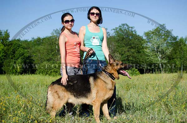 Quality Dog Collar for German Shepherd