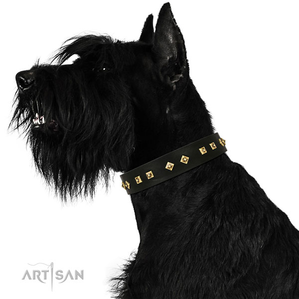Reisenschnauzer everyday walking dog collar of fashionable leather