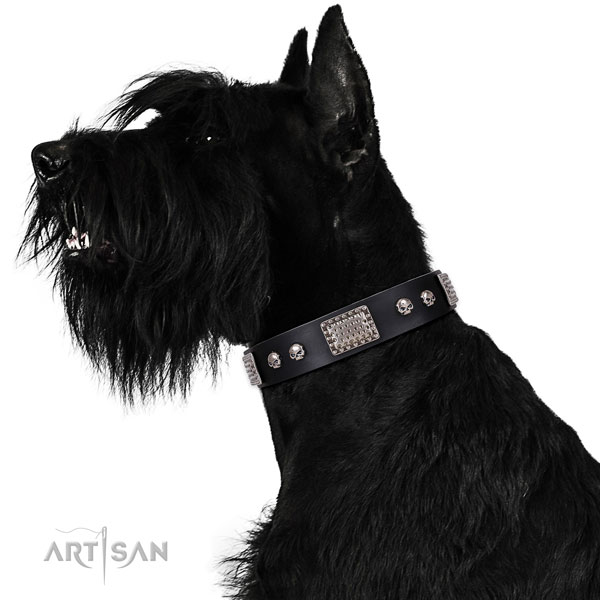 Reisenschnauzer stylish walking dog collar of awesome quality natural leather
