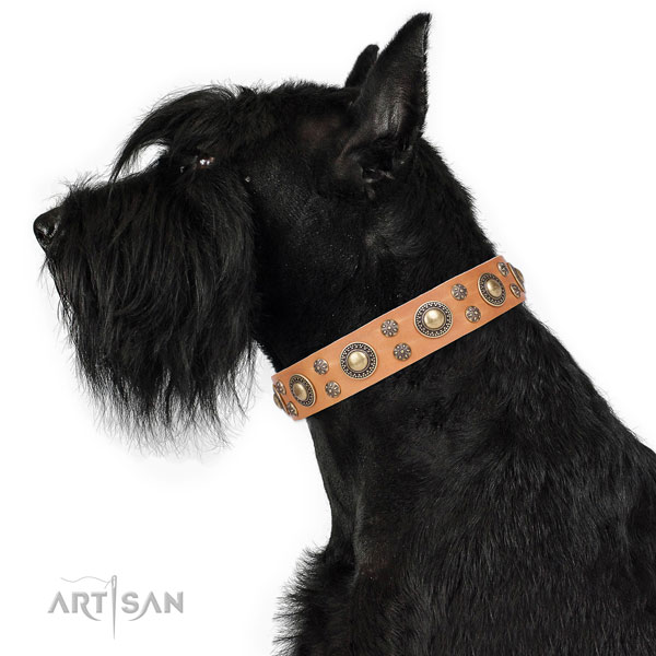Reisenschnauzer embellished full grain natural leather dog collar with decorations
