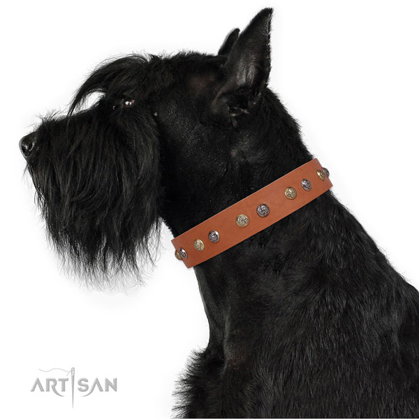 Reisenschnauzer awesome leather dog collar with adornments