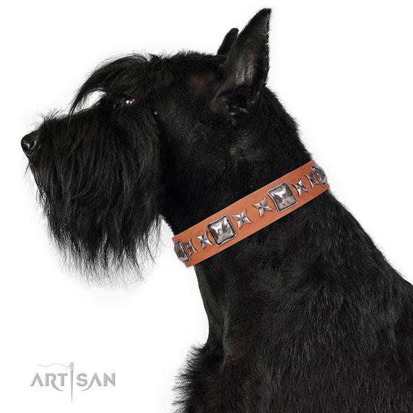 Reisenschnauzer handcrafted full grain genuine leather dog collar with studs