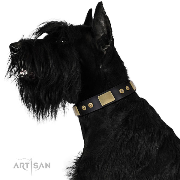 Reisenschnauzer comfortable wearing dog collar of remarkable quality genuine leather