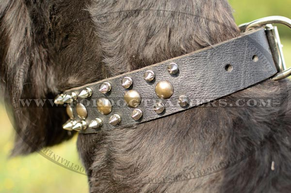 Riesenschauzer wearing Well-made Leather Dog Collar