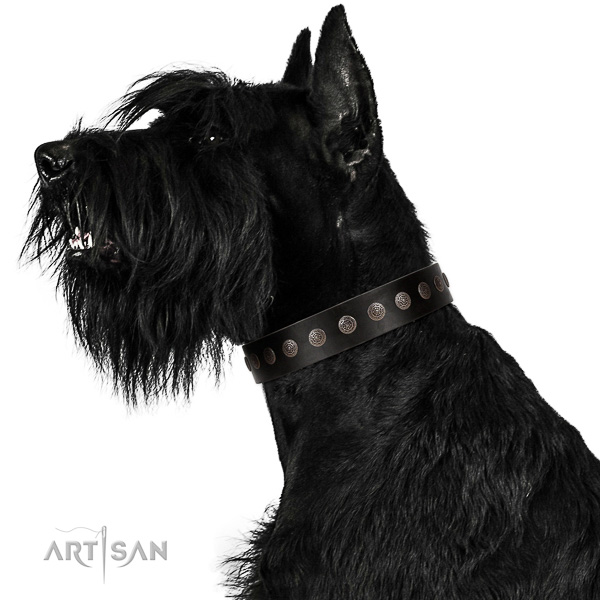 Walking top-notch quality walking leather Riesenschnauzer collar