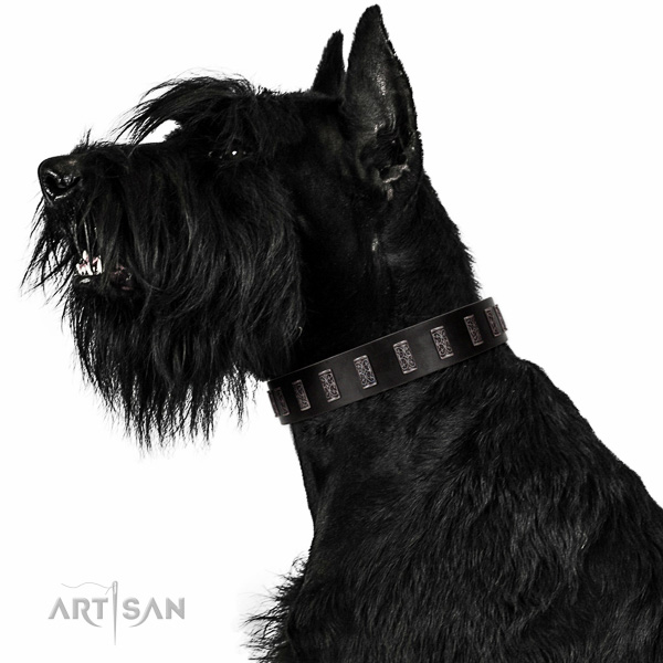 Extraordinary walking black leather Riesenschnauzer collar with chic decorations