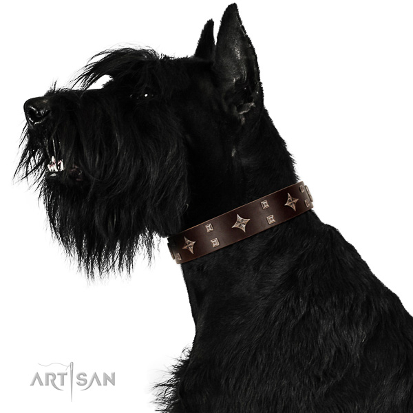 Royal look brown leather Riesenschnauzer collar with silver-like covered decorative elements