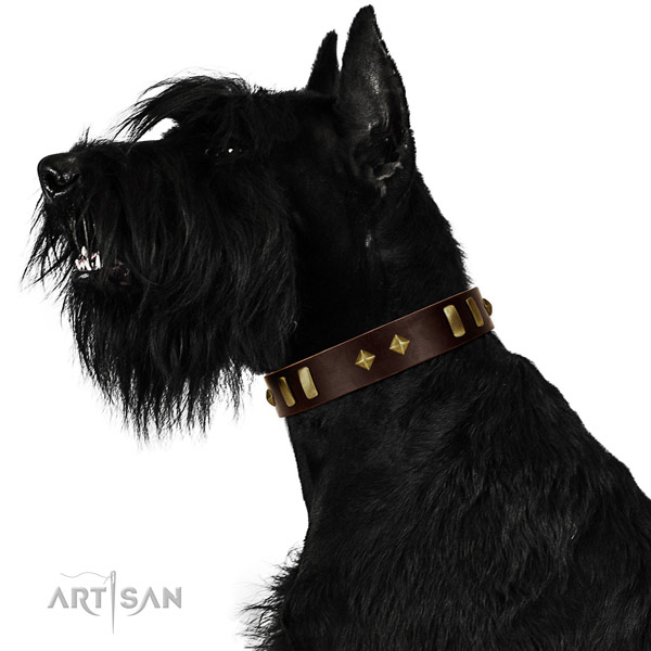 Flexible leather Riesenschnauzer collar for daily use