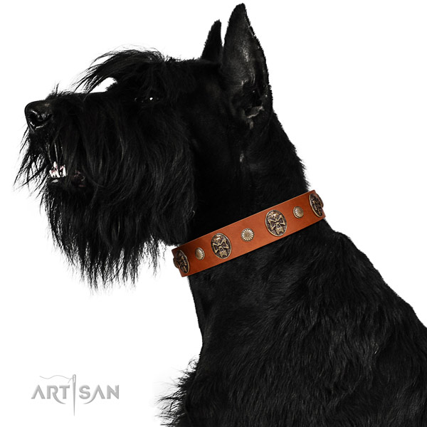 Strong Leather Riesenschnauzer Collar with Sturdy Traditional Buckle