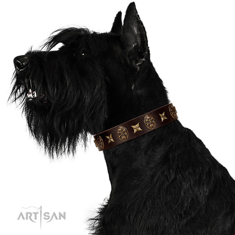 Comfortable leather Riesenschnauzer collar for walking