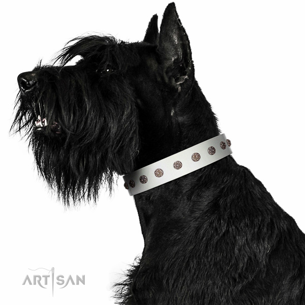 Top-notch quality walking leather Riesenschnauzer