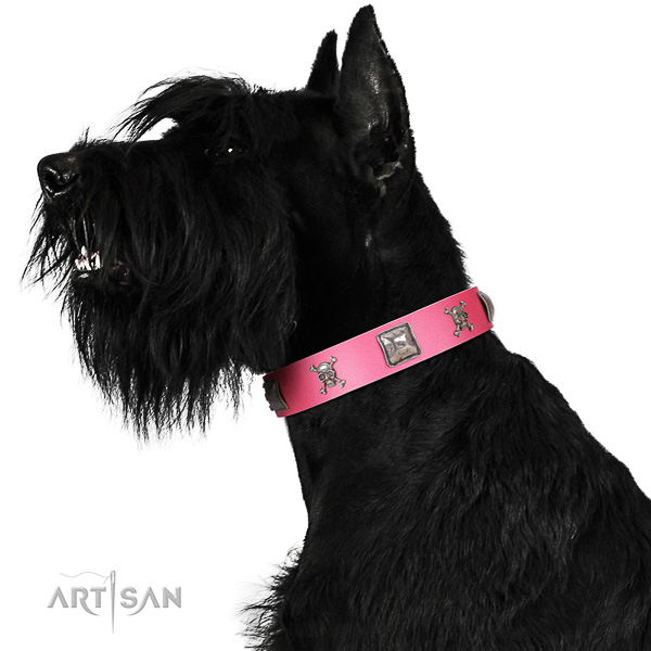 Extraordinary walking pink leather Riesenschnauzer collar