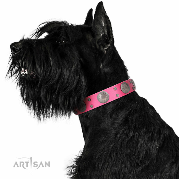 Artisan leather Riesenschnauzer collar for perfect