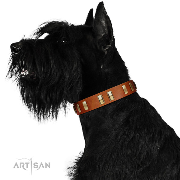 Riesenschnauzer fancy walking dog collar of natural leather