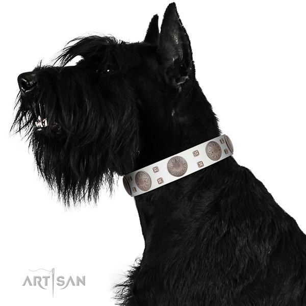 Extraordinary walking white leather Riesenschnauzer collar with chic decorations