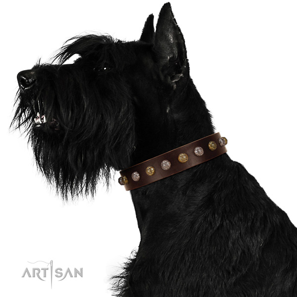 Leather Riesenschnauzer Collar with Stylish Embellishments