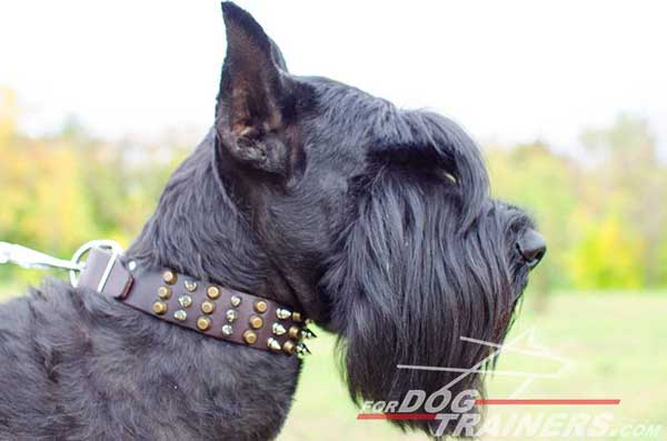 Training Leather Riesenschnauzer Collar