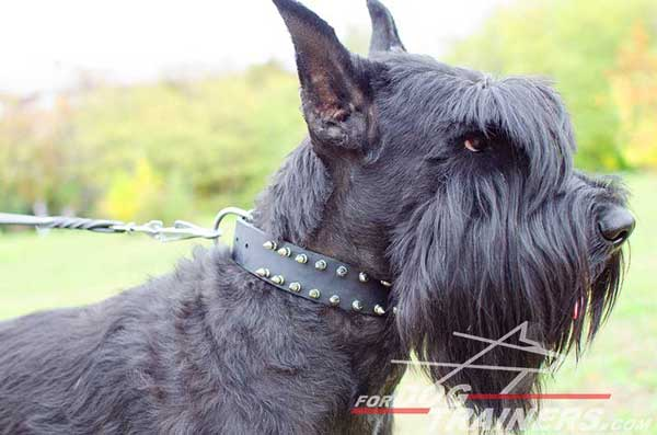 Spiked Leather Riesenschnauzer Collar
