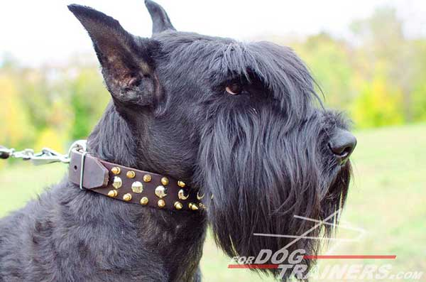 s57 3 rows leather dog collar with nickel studs and brass spikes s57 1073 leather dog collar. Black Bedroom Furniture Sets. Home Design Ideas