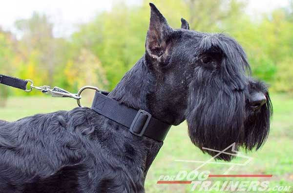 Durable Riesenschnauzer Collar Nylon Dog Walking