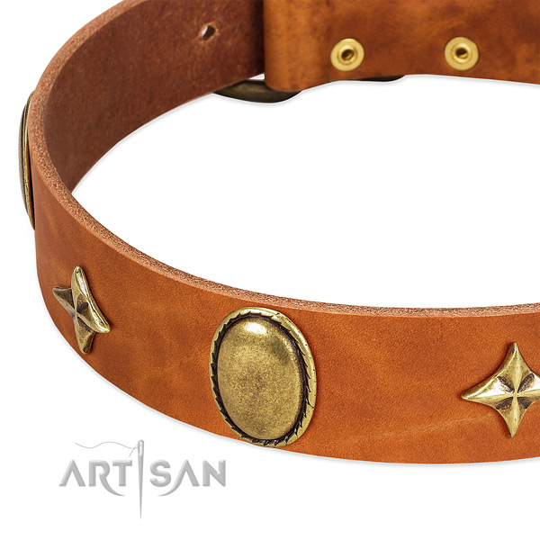 Stars and oval plates on designer tan leather dog collar