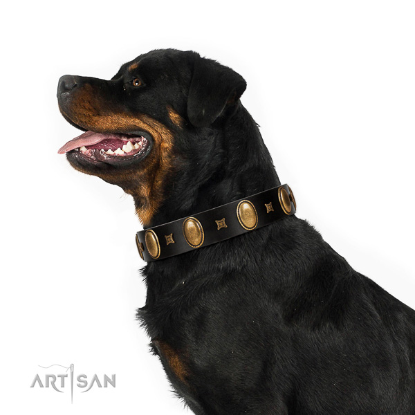Extraordinary walking black leather Rottweiler collar with chic decorations