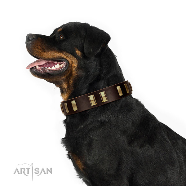 Leather Rottweiler Collar with Stylish Embellishments